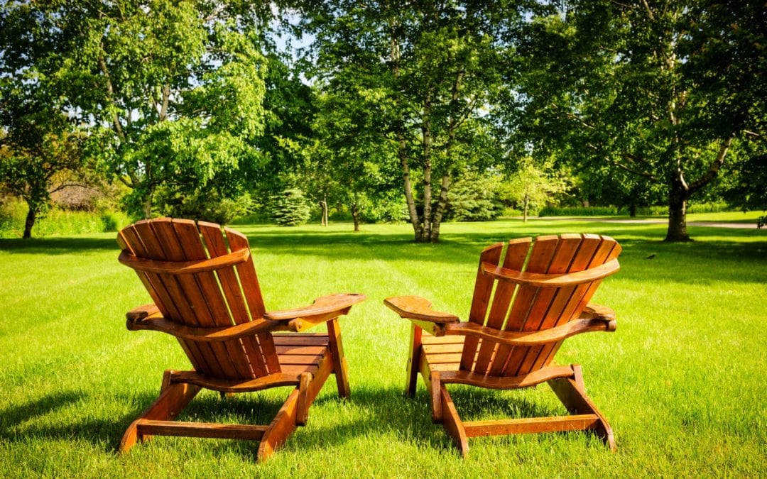 4 Tree Maintenance Tips for Your Property