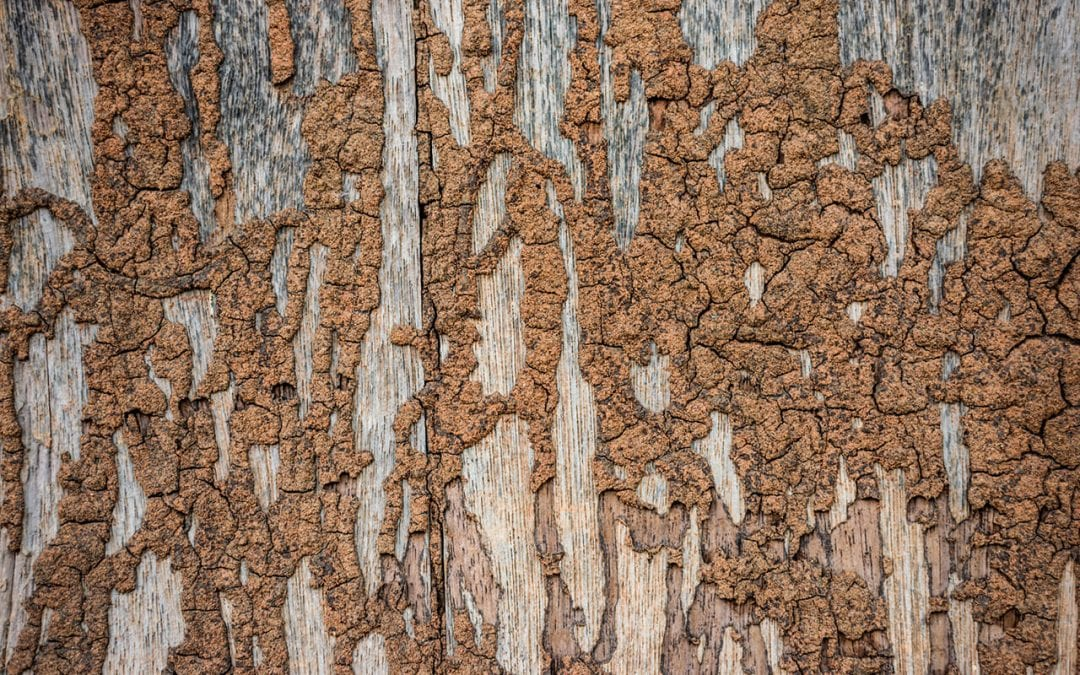Signs Of Termites in the Home