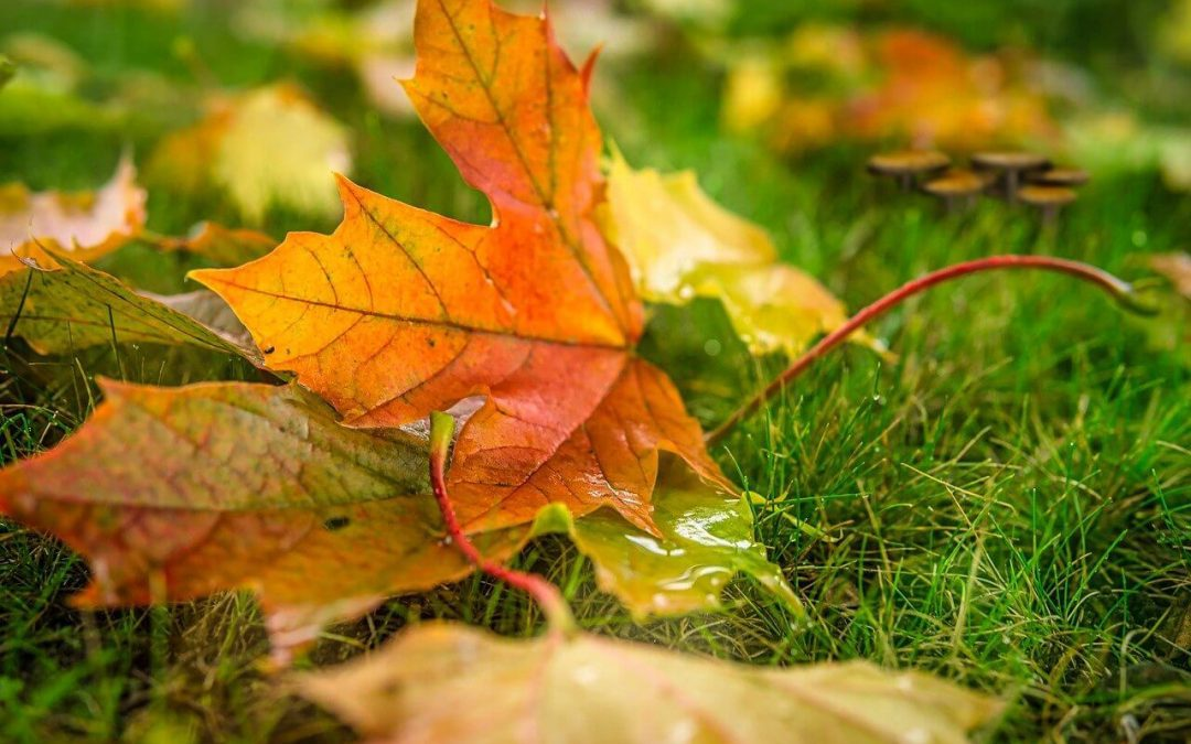 4 Tips for Fall Lawn Maintenance